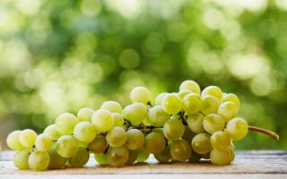 La prima volta italiana del Simposio Internazionale dell'Uva da Tavola