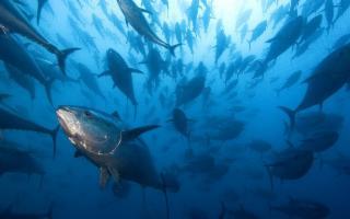 Pesca del tonno rosso: le novità per il 2019