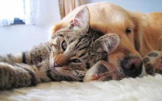 Una famiglia italiana su 3 ha in casa un animale