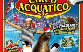 Un sogno nel magico mondo sommerso: il 'Circo Acquatico'