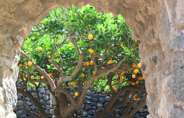 Giardino Pantesco Donnafugata - Interno con arance