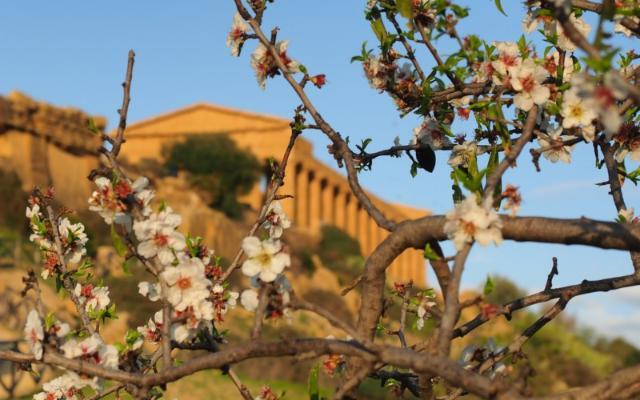 Il Mandorlo in Fiore entra nel Registro delle Eredità immateriali della Sicilia