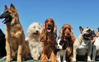 Prima esposizione Nazionale in Sicilia aperta a tutti i cani di razza