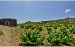 I giardini di Pantelleria e il valore dell'acqua