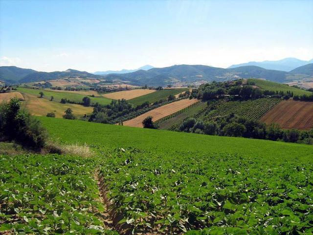 Coltivazioni nella campagna siciliana