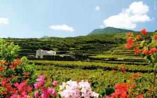 Donnafugata per la biodiversità ed il rimboschimento di Pantelleria
