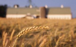 Rimettere in discussione le politiche italiane anti-OGM?