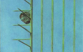 Il Mediterraneo invisibile - Antologica di Piero Guccione