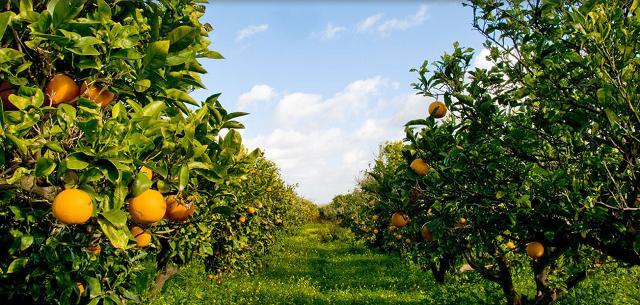 Oranfrizer si è affiancata a Librì Progetti Educativi perché vorrebbe avvicinare i bambini alla natura, alla frutta vera, ai sapori autentici...