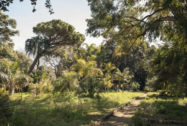 Un paradiso tropicale nel cuore di Palermo