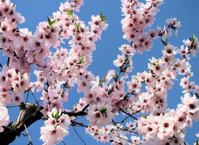 Presentato il Festival del Mandorlo in Fiore, dell'anno prossimo
