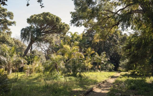 Paradiso tropicale nel cuore di Palermo