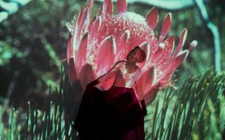 Plant Echoes, di Uriel Orlow