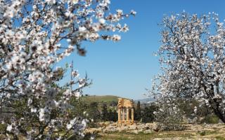 Torna il concorso ''Fotografa la Festa del Mandorlo in Fiore''