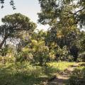 Alla scoperta dei Grandi Giardini Siciliani