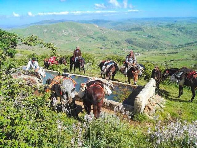 Un itinerario attraverso la Sicilia... a dorso di mulo
