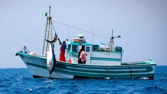 Pesca del tonno