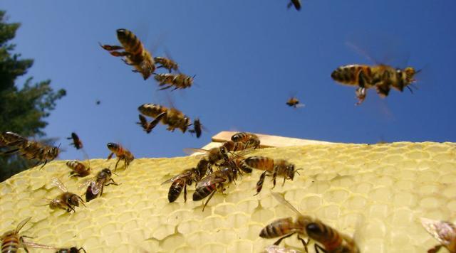 Estate, purtroppo, vuol dire anche vespe e calabroni...