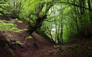 Sulle Madonie, Yoga in cammino ai piedi del Monte dei Cervi