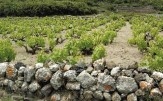 Avvicinarsi alla viticoltura e ai vini di Pantelleria