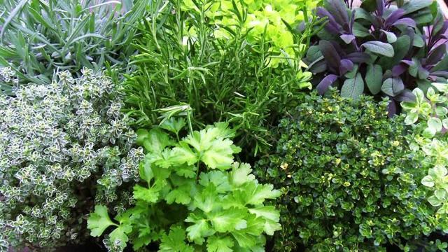 Varie erbe aromatiche