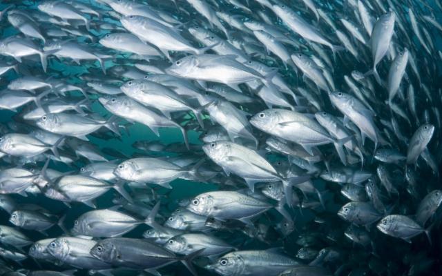 La Sicilia punta sull'acquacoltura