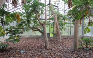 Palermo è un Giardino Planetario