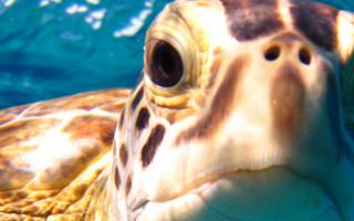 Rio Mare e l'Area Marina Protetta ''Isole Egadi'' lanciano il ''Marine Turtle Tracking''