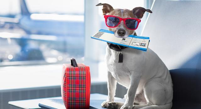 In viaggio con il cane: ecco cosa mettere nella valigia del nostro fido amico...
