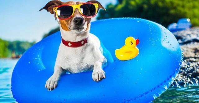 Per una vacanza ''animale'' in Sicilia: in viaggio con il vostro cane o il vostro gatto