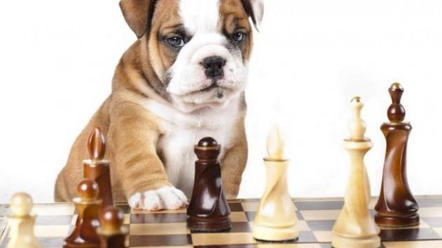 Un vasto set di giochi non farà annoiare i nostri cuccioli durante il viaggio