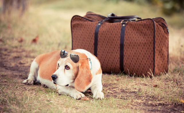 È bene pensare di mettere in valigia anche un kit per il proprio amico a quattro zampe...