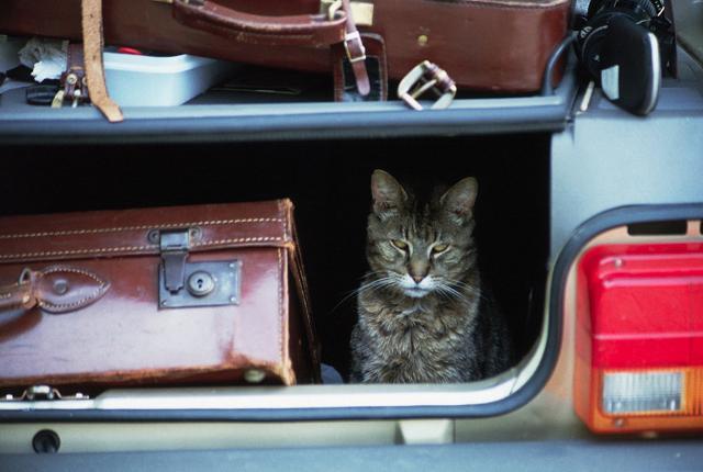 Per garantire una partenza sicura è opportuno verificare  anche i documenti del proprio amico a quattro zampe...