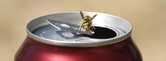 Una vespa sopra una lattina di bibita