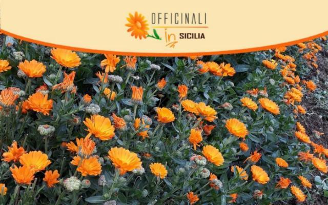 Torna ''Officinali IN Sicilia''