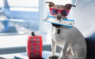 Come fare sentire a casa i nostri animali, in vacanza