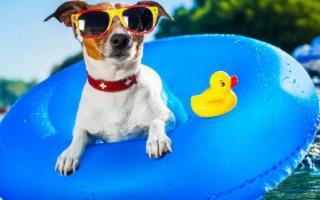 Vacanze ''animali'' in Sicilia: in viaggio con il vostro cane o il vostro gatto