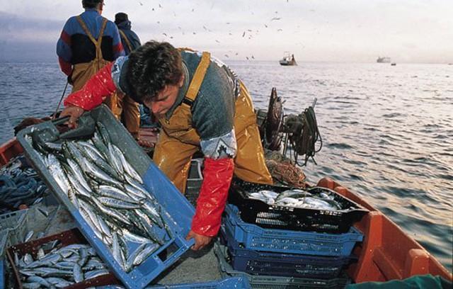 Pescatori di pesce azzurro