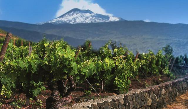 """La viticoltura nelle zone dell'Etna è definita, come quella praticata a Pantelleria, """"Viticoltura Eroica"""""""