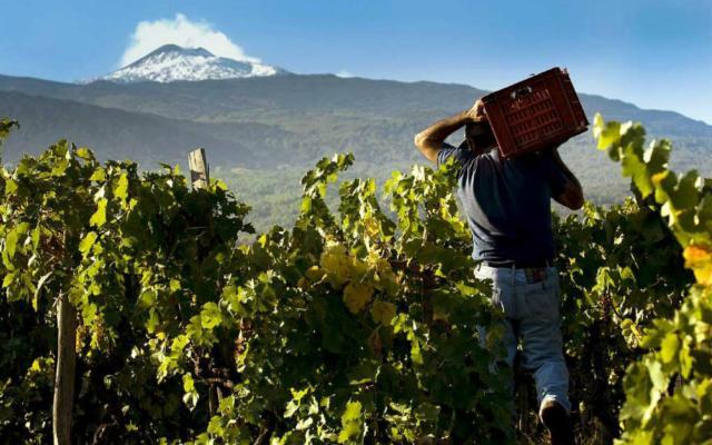 L'Etna è una risorsa per tutto il vino siciliano