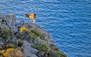 Marettimo l'isola selvaggia dei mufloni
