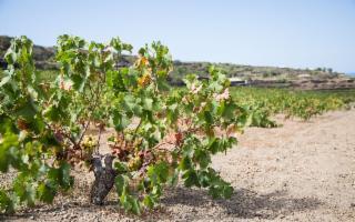 Il Consorzio Pantelleria Doc al Vinitaly 2019