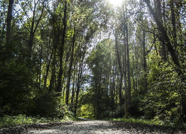 La mistica atmosfera di un sentiero in un bosco dei Nebrodi