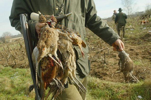 Se nel 2006 i cacciatori siciliani erano 49.588 (ossia 34 ogni mille ettari di territorio cacciabile), oggi (dati Istat 2017) nell'Isola sono 30.255