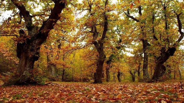 Nei boschi dell'Etna sono tanti i castagni che regalano grandi quantità di frutti. Tra l'altro sul vulcano le castagne hanno un sapore unico, grazie al terreno lavico, ricco di minerali