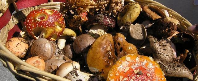 Quanto siamo realmente sicuri quando abbiamo a che fare con i funghi?