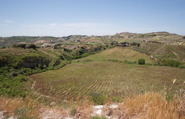 Panoramica sulla conca del biviere - Santa Ninfa