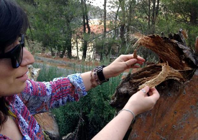 Graziana Giunta controlla le fibre di una pala di fico d'India