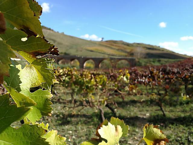 I produttori di vino diventeranno oratori di un viaggio in cui l'enologia è il pretesto per raccontare il territorio dall'incredibile valore naturalistico e culturale.