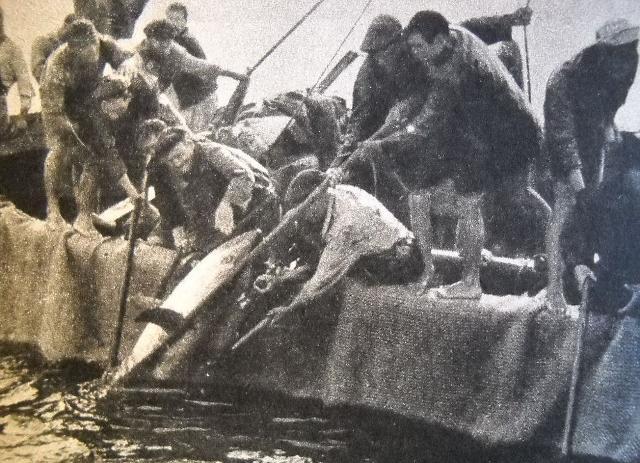 Mattanza nel mare di Scopello